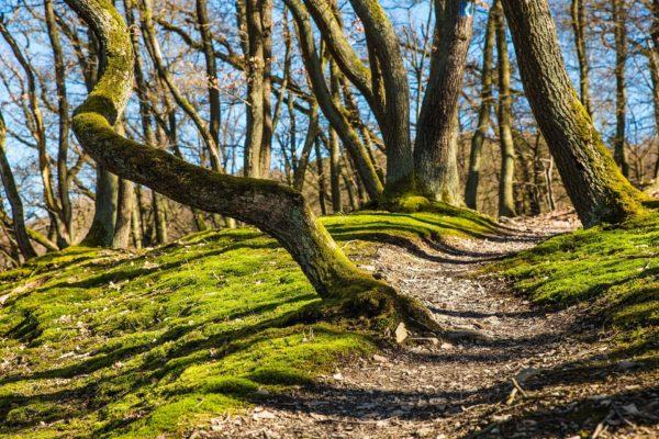 Sonniger Waldweg
