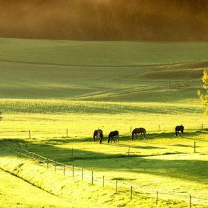Pferde grasen auf einer Weide