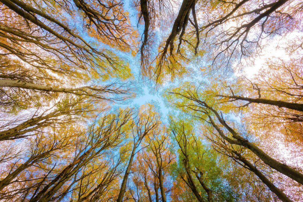 Blick von unten im Wald in den Himmel