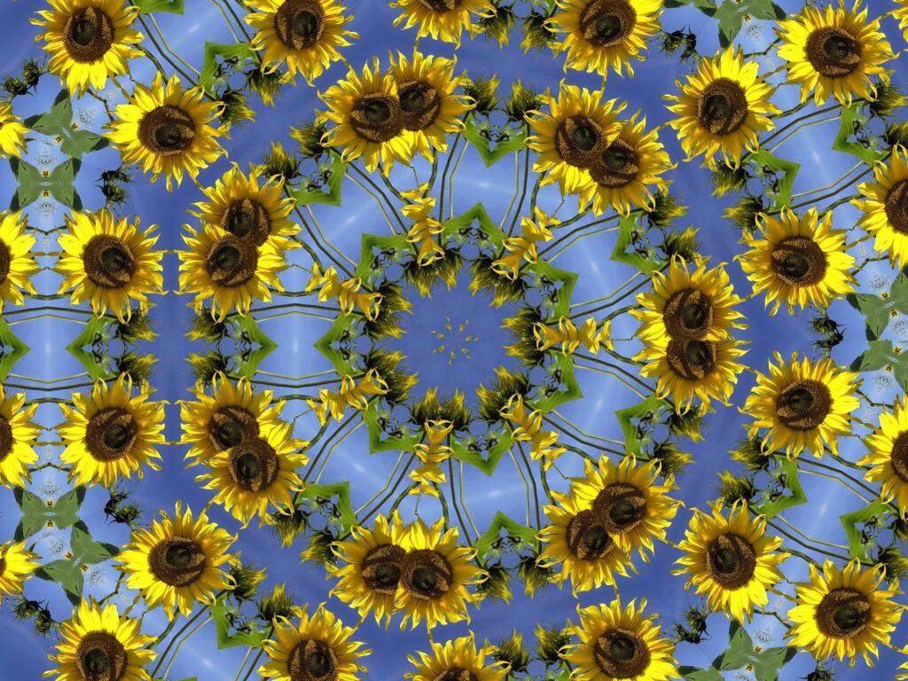 Fröhliches Kaleidoskop aus sehr vielen Sonnenblumen vor einem hellblauen Himmel
